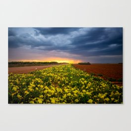 Yellow Flower Road - Path of Wildflowers Lead Into Texas Sunset on Stormy Evening Canvas Print