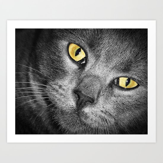 Silver Cat Art Print