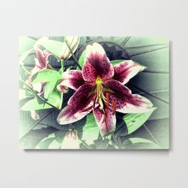 Pink Lily Flower Cottage Chic Modern Country Home Decor A419A Metal Print