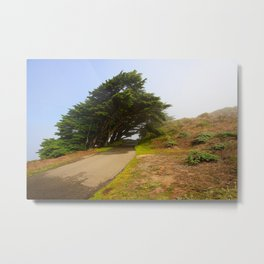 Wind Swept Trees Metal Print