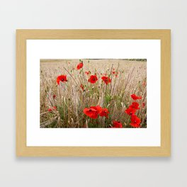 Poppies in cornfield Framed Art Print
