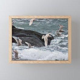 Gulls shop for Dinner Framed Mini Art Print
