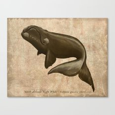 North Atlantic Right Whale Canvas Print