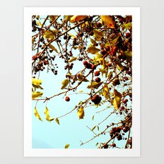 cherries in autumn Art Print