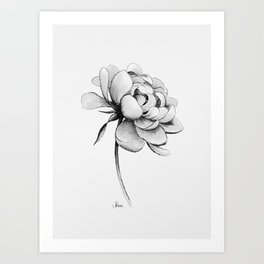 Peony Flower, Black and White Art Print