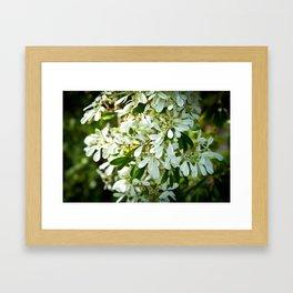 White Waterfall Framed Art Print