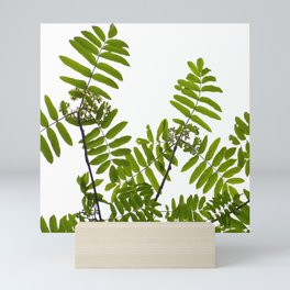 Green Rowan Leaves White Background #decor #society6 #buyart Mini Art Print