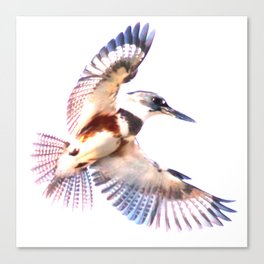 Colorful Kingfisher Canvas Print