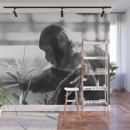 Wildlife Collection: Capuchin Monkey Wall Mural
