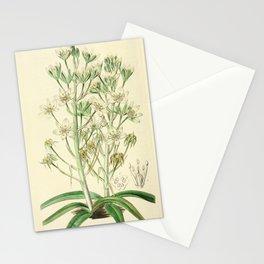 Flower 028 ornithogalum montanum Mountain Ornithogalum22 Stationery Cards