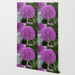 Giant Allium Wallpaper