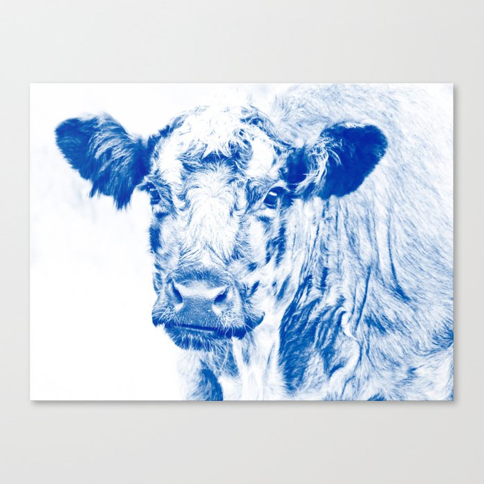 Ardnamuchan Coo - Blue Canvas Print