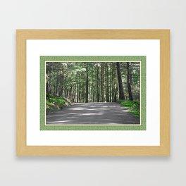 WOODLAND ROAD OF DOUGLAS FIR FOREST Framed Art Print
