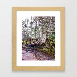 Alaskan Trees Framed Art Print