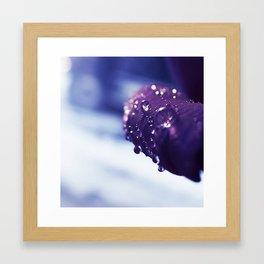 Petal Drops Framed Art Print