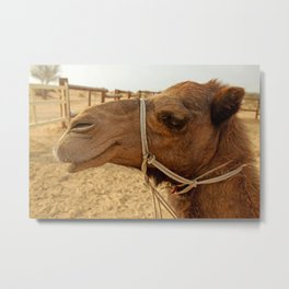 Profile of Camel in Negev Desert Metal Print