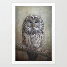 Ural Owl ( Grey owl ) Art Print
