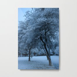 Early Morning Snow, Ravenna Park Metal Print