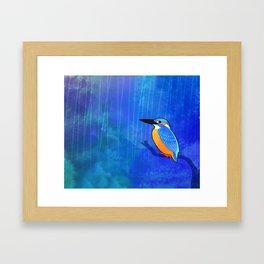 Common Kingfisher (Alcedo atthis) Framed Art Print