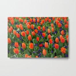 Tulip Field 2 Metal Print