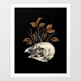 Kite Skull Study Art Print