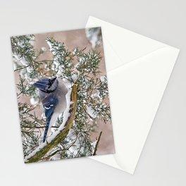 Snow Jay Stationery Cards