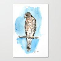 hawk Canvas Prints featuring Hawk by Elena Sandovici