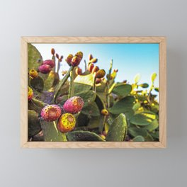 Fig trees in the countryside of Salento Framed Mini Art Print