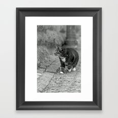 The cat in the alley Framed Art Print