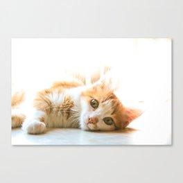 Tippy cat Canvas Print