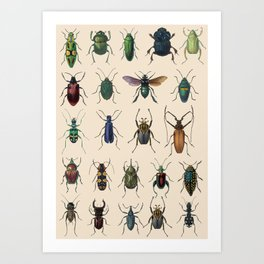Insects, flies, ants, bugs Art Print