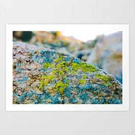Hyper Lichen on Warm Desert Rock Art Print