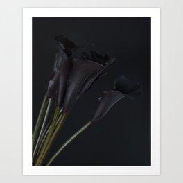 Dark Calla Lilies Art Print