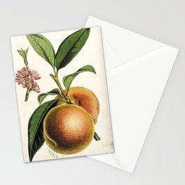 A peach plant - vintage illustration Stationery Cards