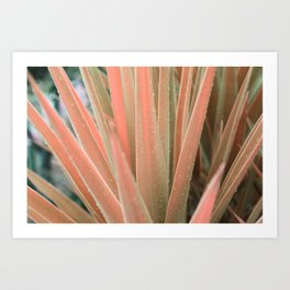 Pink aloe Art Print