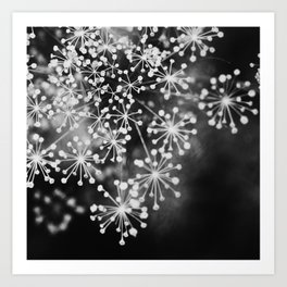 Dill In Black and White Art Print