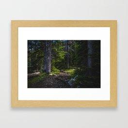 Deep Woods Near Fairy Lake, Bridger Mountains Montana Framed Art Print