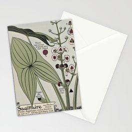 Maurice Pillard Verneuil - Étude de la plante (1903): Sagittaria / Water Arrow Stationery Cards