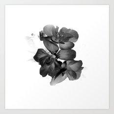 Black Geranium in White Art Print