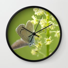 Butterfly on Spring flowers Wall Clock