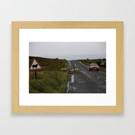 sheep crossing Framed Art Print