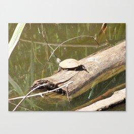Turtley Canvas Print