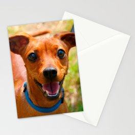 Pinscher Smiling Blue Collar Dog Stationery Cards