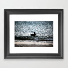 Galapagos Pelican Framed Art Print