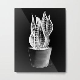 Snake plant in chalk Metal Print