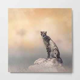 Young Cheetah sitting on a rock Metal Print