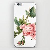 botanical iPhone & iPod Skins featuring Botanical by Goga Alexandra