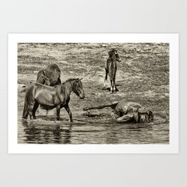 Horses taking a bath and relaxing Art Print