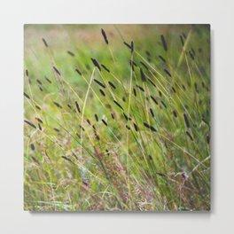 Summer herbs Metal Print