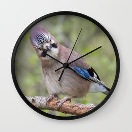 Shy colourful Jay bird Wall Clock